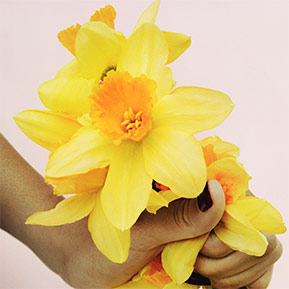 Marc Jacobs Perfect Daffodil